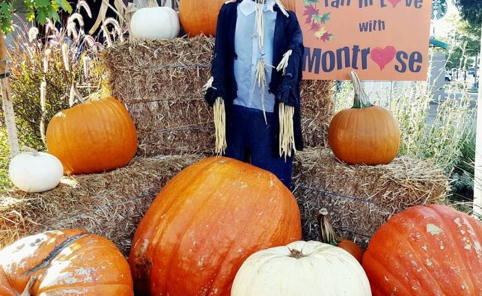Fall in love with Montrose 🎃🐱🕸️